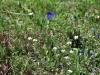 2012-06-13-wandern-grabnerstein-091